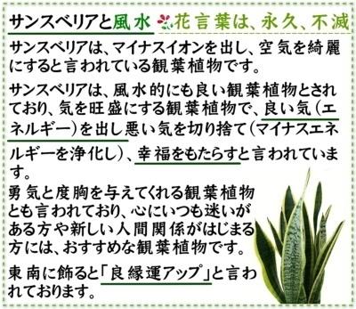 g5-sansum-s-03-dl.jpg